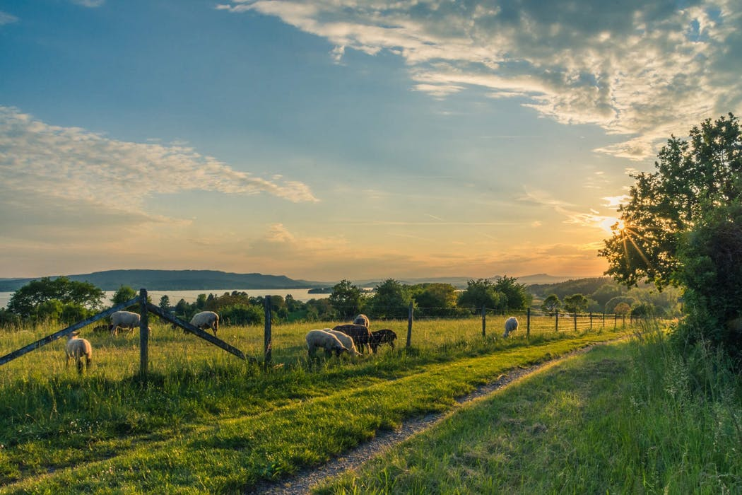 Farm, Farming, Farmers, Organic